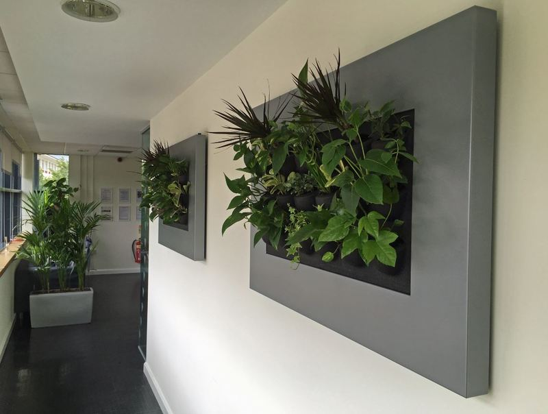 Live Picture Mini Green Walls plants for offices in Nottingham