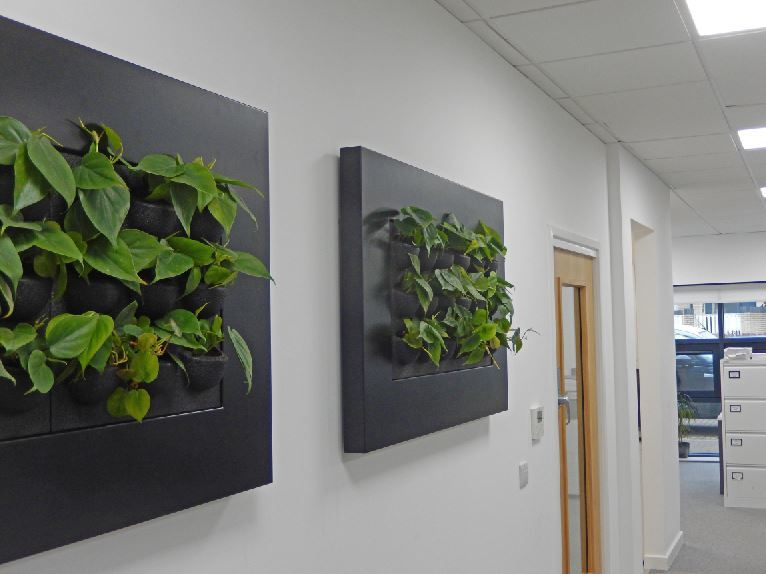 Wall mounted interior lanscaping in Nottingham offices