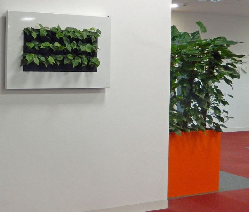 Plants for hire on walls in this Nottingham office