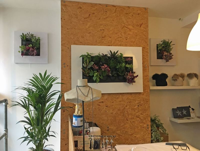 Wall mounted mini Green Wall plants for offices