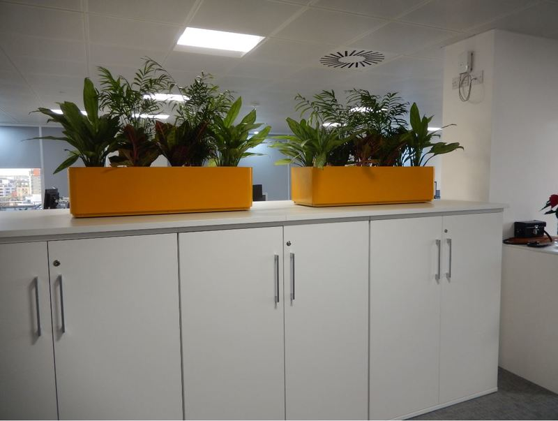 Interior plants for cabinets in Nottingham office