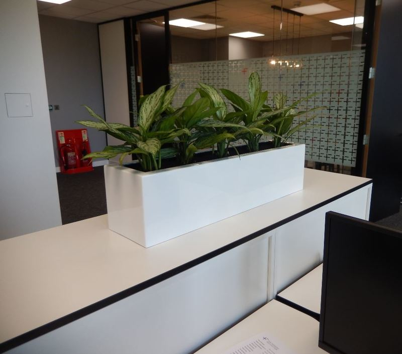 Office plant large rectangular cabinet display for this Nottingham office