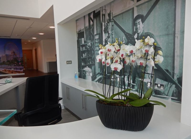 Interior Plants Orchid desk bowl for Nottingham office Reception