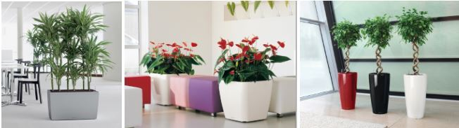 Office Plants UK Nationwide