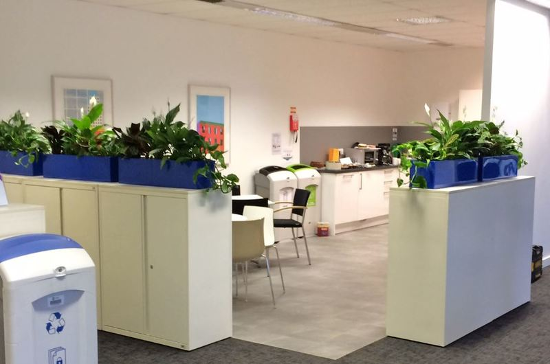 Lush leafy office Cabinet Interior Landscaping plants for Nottingam Breakout area