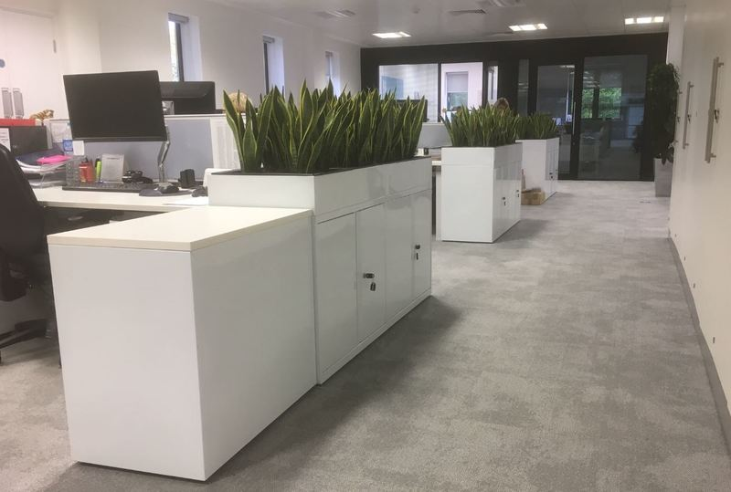 Cabinet top Sansevieria interior office plants Nottingham