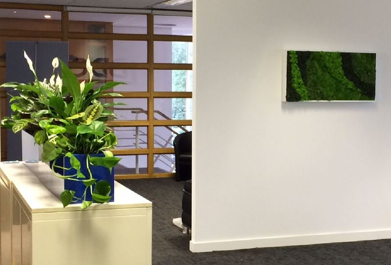 Moss Art Pictures for offices in the Midlands