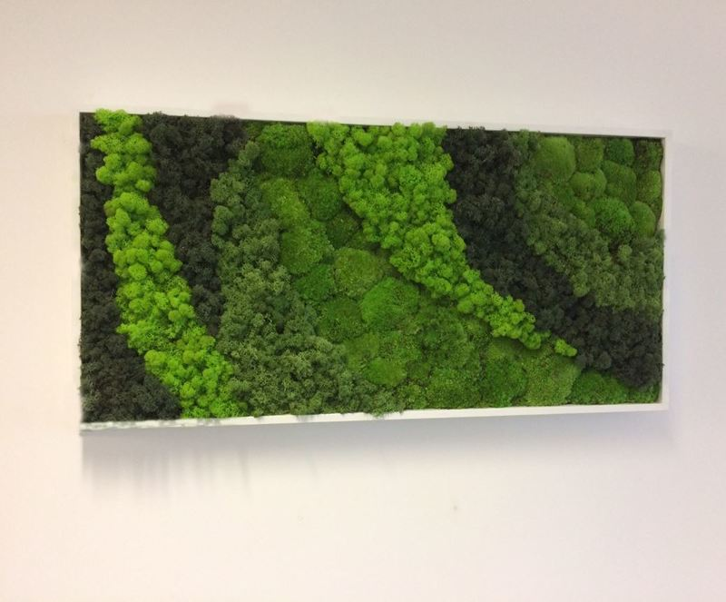 Moss Art Pictures for office Receptions in the West Midlands