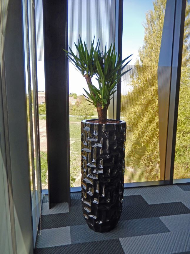 Mosiac Planter with a branched Yucca plant in this Derby office meeting room
