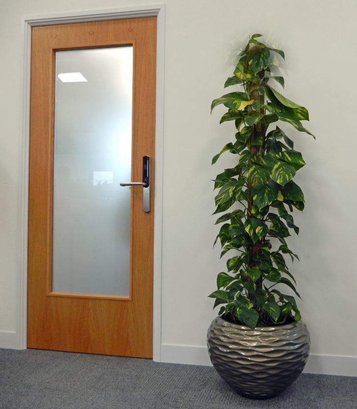 Sea Shore Plant Display with a Schidnapsus Aureum in Nottingham office