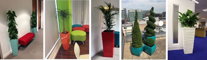 Plants for Birmingham Solicitors Office