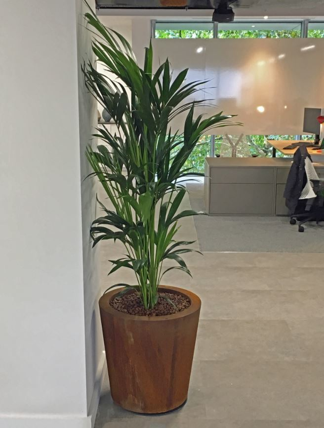 Rusty corten steel plant display with  Kentia Palm