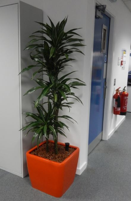 Bright orange plant display contrasts with a blue office door