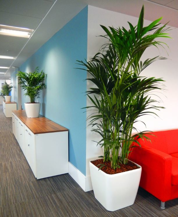 Healthy green plants bring a healthy sense of calm to this Birmimgham office