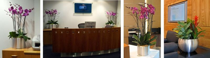 Office Reception plants in Birmingham & the West Midlands