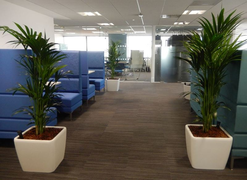 Bushy Green Palm plants add privacy & screening to these Midlands office Meeting Booths