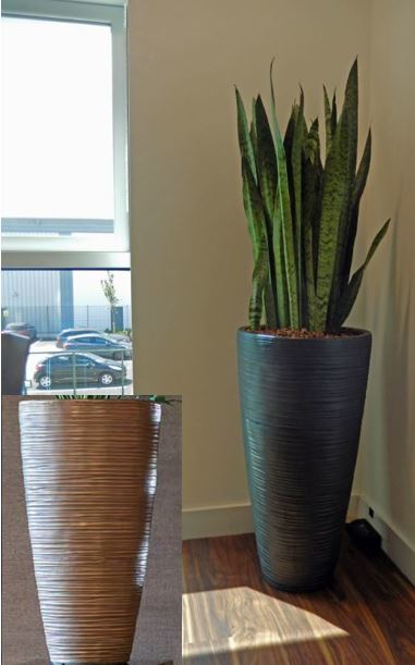 Small Derby office canteen has a Curved vase in Iron planted with a Sansevieria Zeylanica plants
