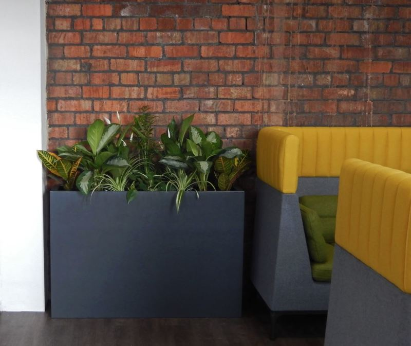 Mixed leafy green plants in a tall Barrier rectangular display for this Midlands Office Canteen