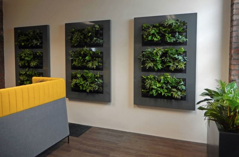 Green Office Walls in Birmingham with three Live Picture XL Plant Pictures