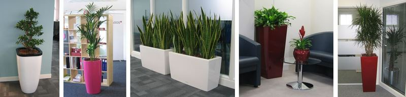 Birmingham offices go green with plants