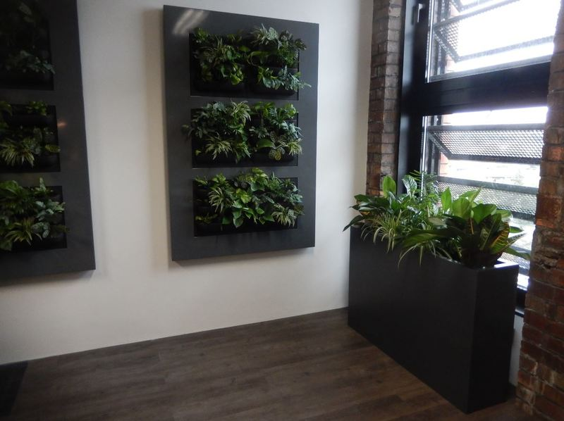 Green Office Walls with Live Picture XL wall mounted plant displays