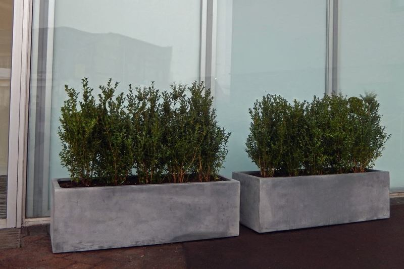 Rectangular Fibrestone displays planted with Buxus plants used out side the main office entrance