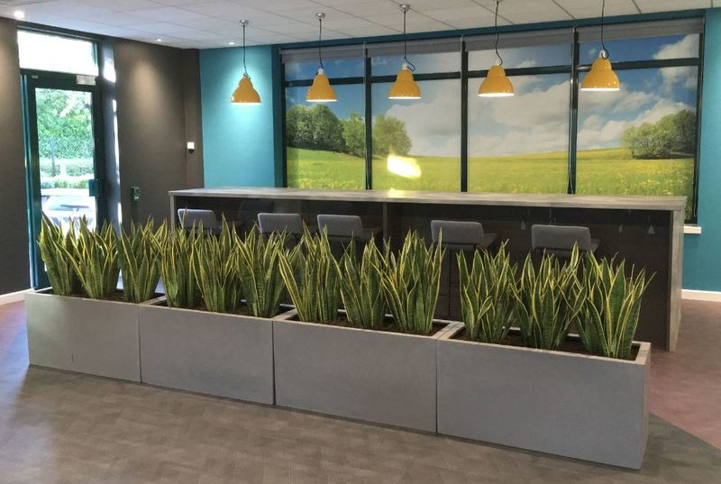 Rectangular Fibrestone Displays with Sansevieria plants