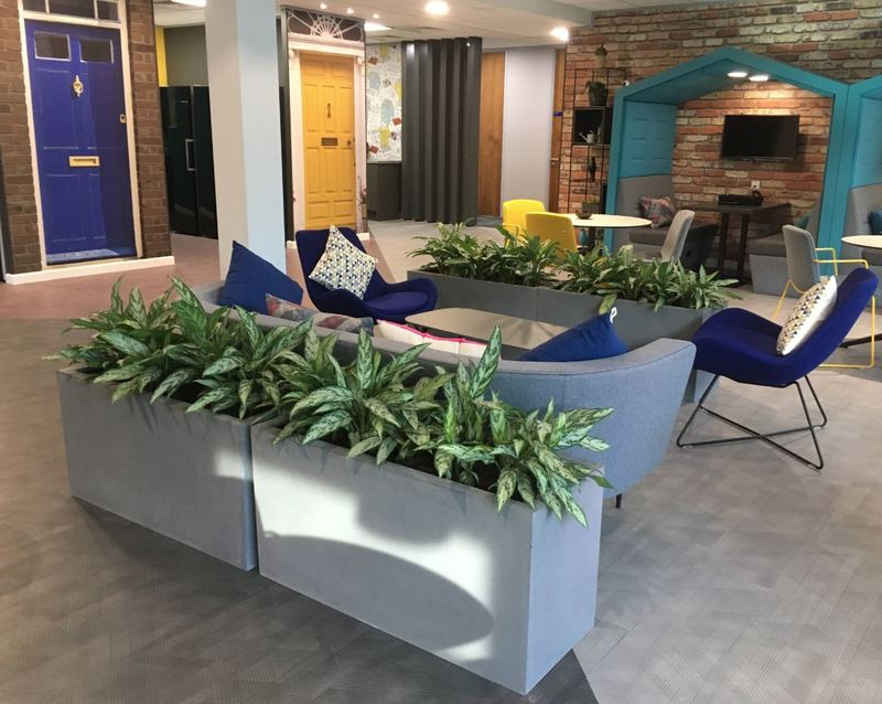 Fibrestone Displays with Aglaonema plants for this Leamington Spa offfice Breakout area