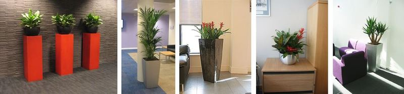 HSBC West Midlands offices & Call Centre plant displays