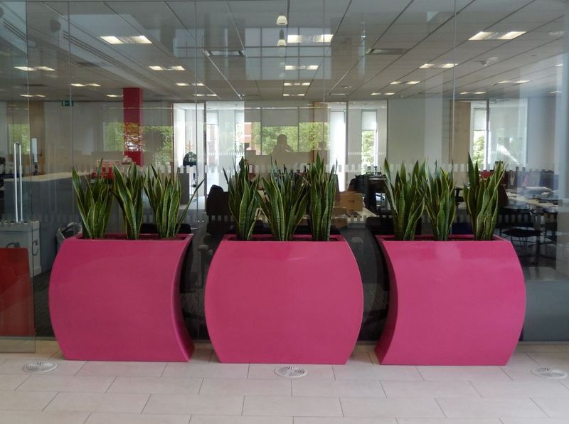 New offices of National Procurement companies chooses curvy trough plant displays