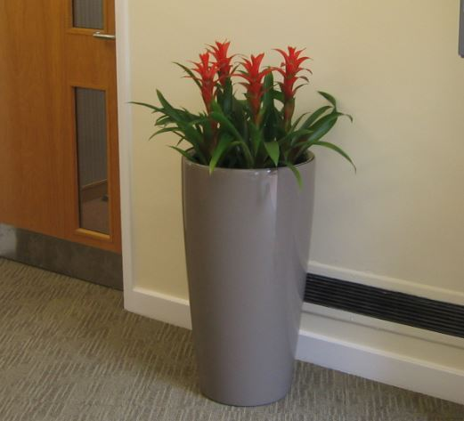 Nuffield Hospital plant display in Reception area