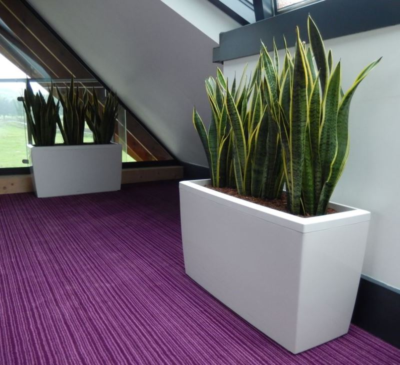 Plants for Stratford upon Avon Restaurant & Conference centre