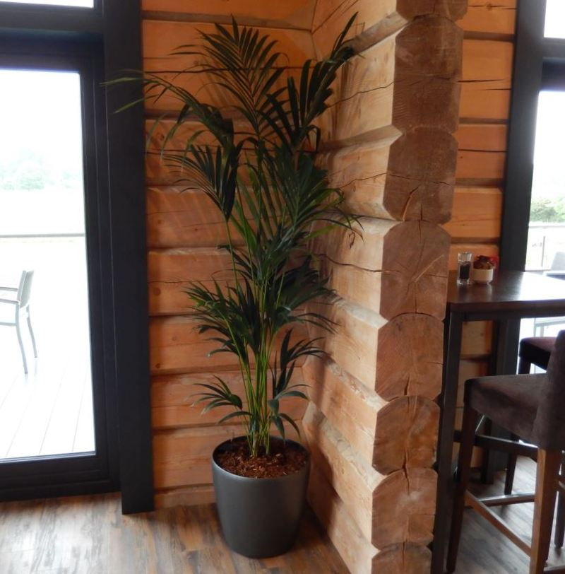 Palm plant display for new Stratford upon Avon Confernece Centre