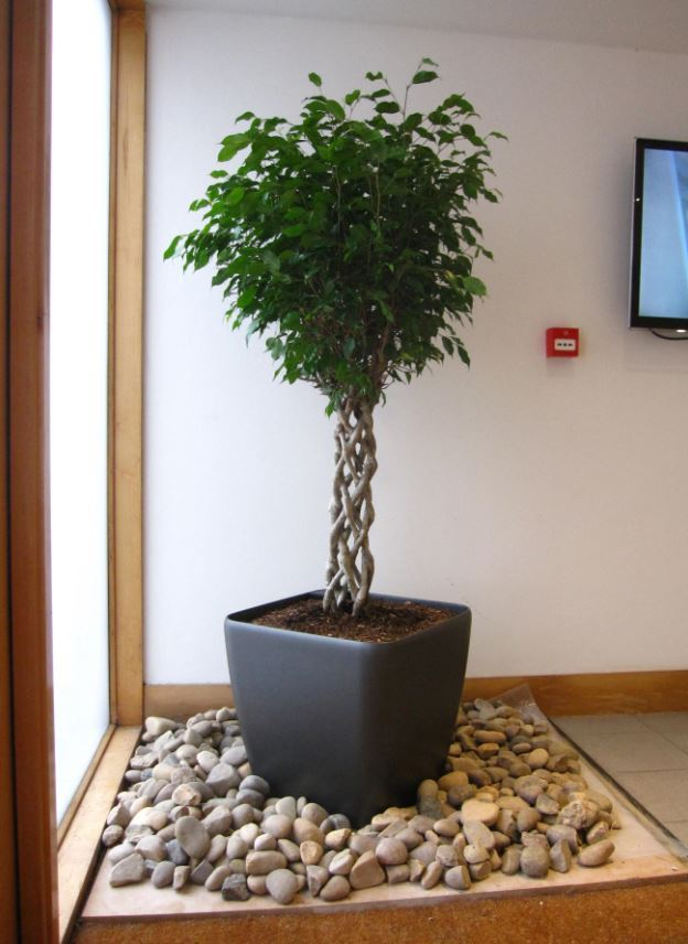 Main Reception Plant Display on wheels