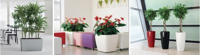 Office Plants Leicestershire