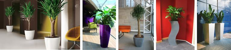Plants for offices in Leicester