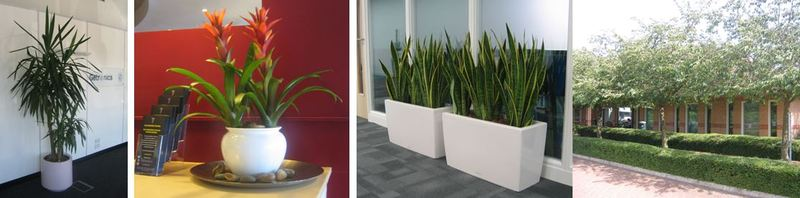 Plants supplied to offices, hotels and leisure clubs in Milton Keynes