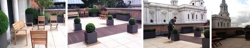 Plant displays on the St Pauls office roof terrace in London
