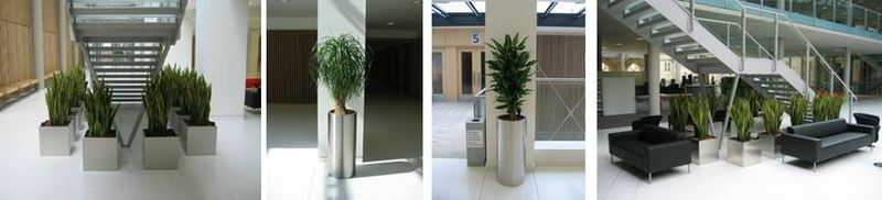 Nottingham University office and atrium plants