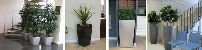 Derby and Nottingham offices with artificial plant displays