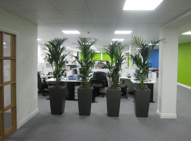 Offices in the DE1 area of Derby order Plant Displays
