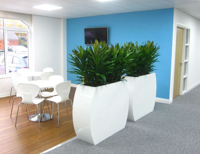 Offices in Derby City Centre have functional Plant Displays for screening