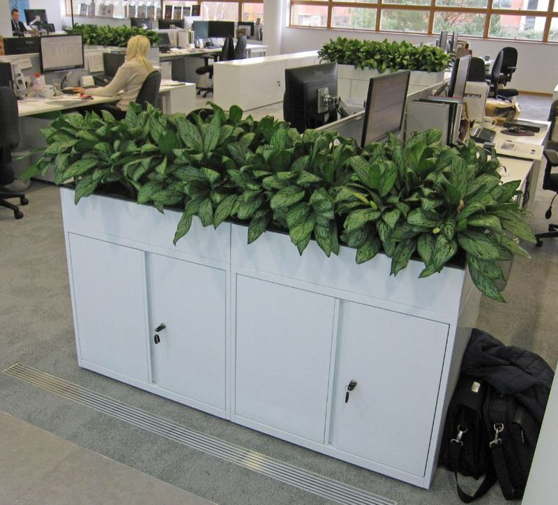 Cabinet top plants supplied throughout this abingdon office
