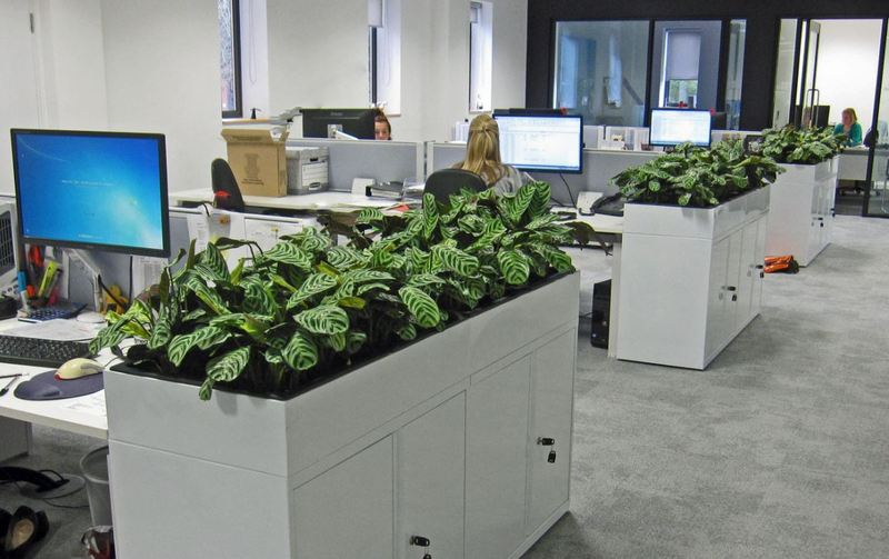 Stromanthe amabilis plants were used in this part of the offices