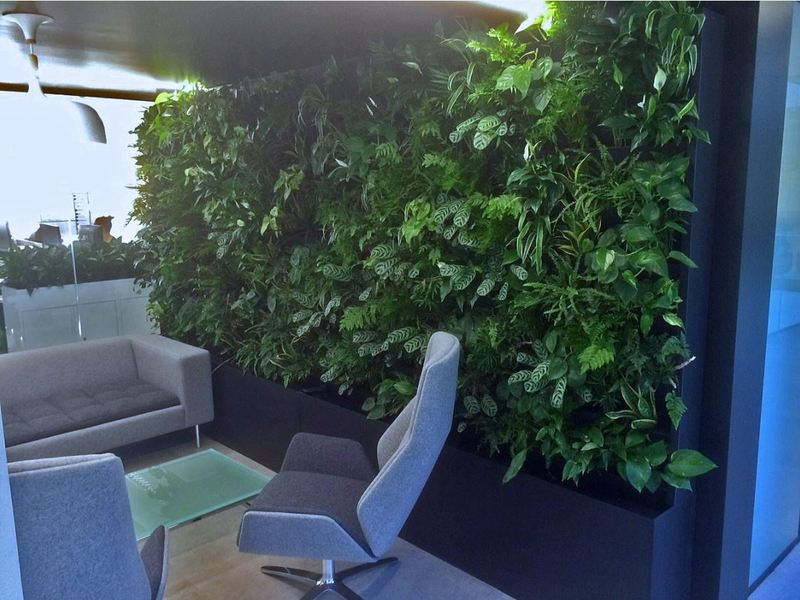 Living Green walls for Birmingham and the Midlands