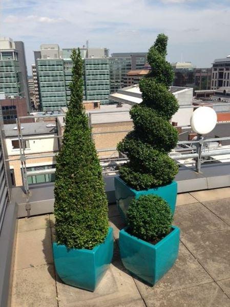 Funky plants for birmingham offices office landscapes for Interior exterior birmingham al