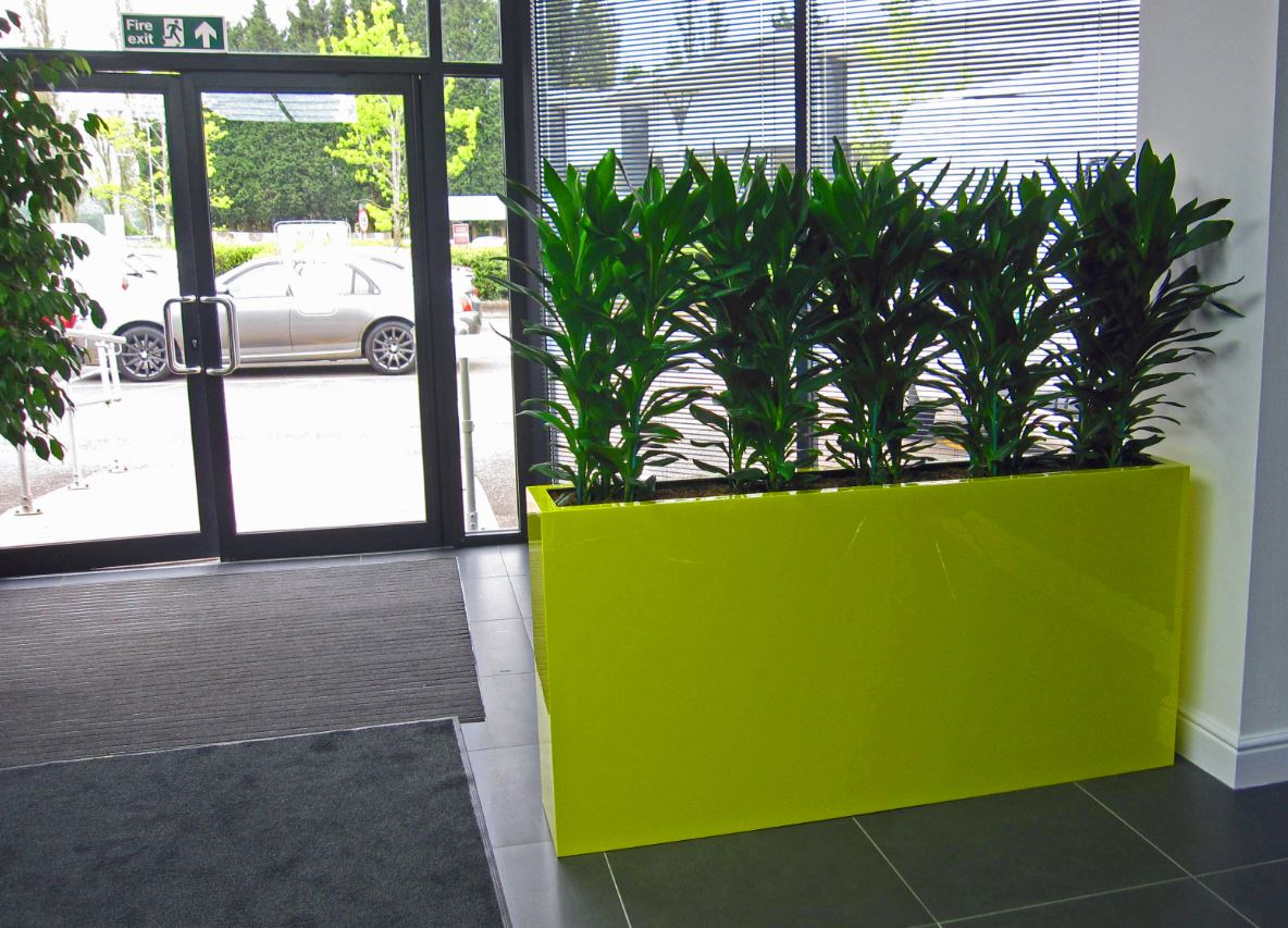 office planter. acid yellow barrier planter with green cordyline plants in birmingham office reception e