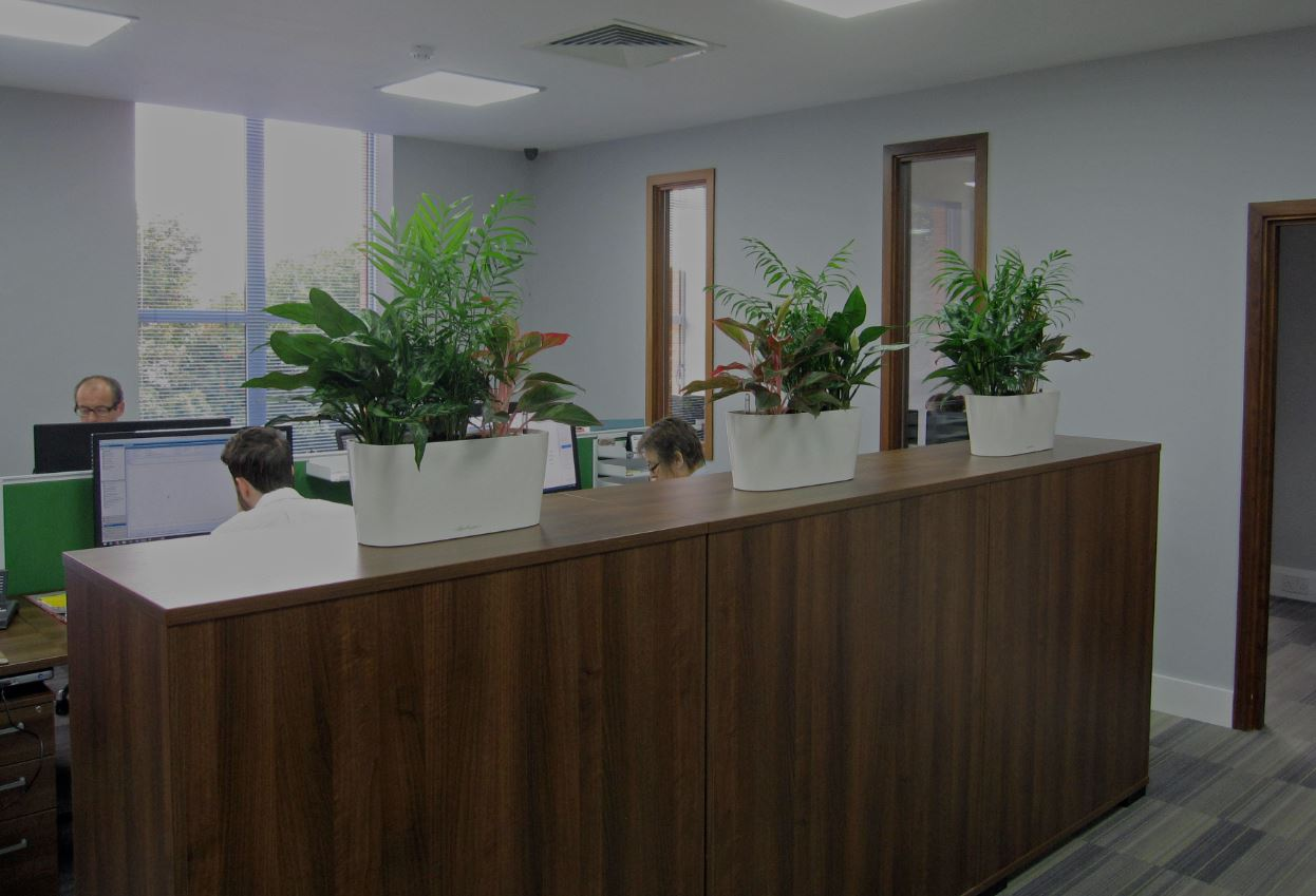 Colourful cabinet top plant displays in Hockley Birmingham Construction offices