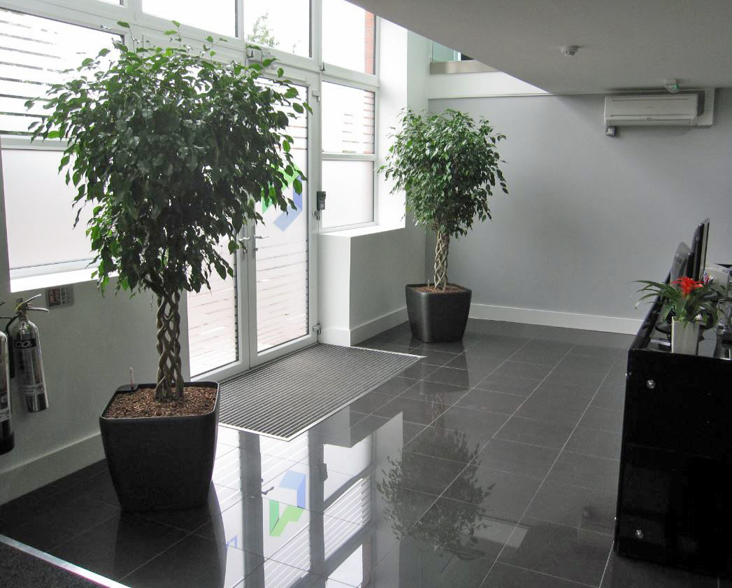 Hockley Birmingham Reception with Ficus Open Braided plants