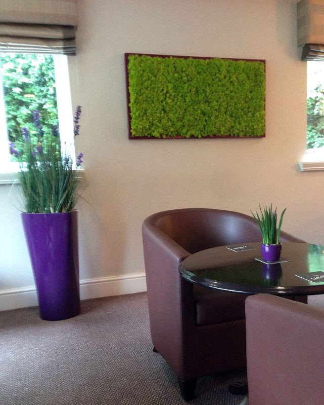 Moss Pictures & an artificial lavender grass display
